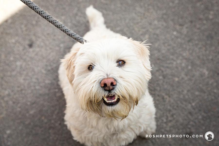 toronto pet photography event