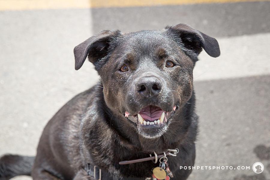 happy smiling dog photography