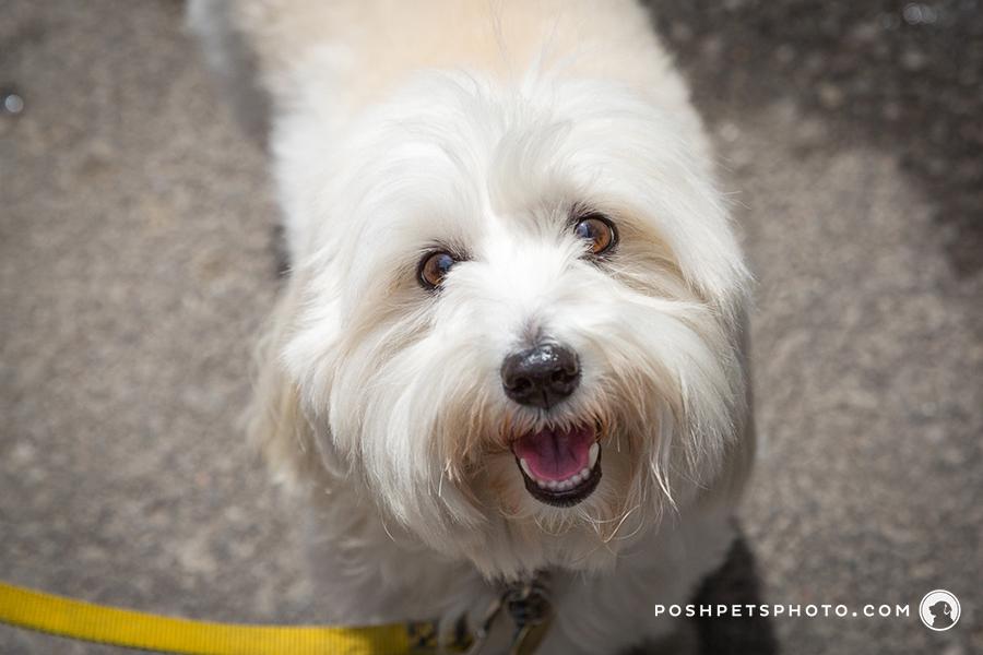 fine art dog photographer in toronto