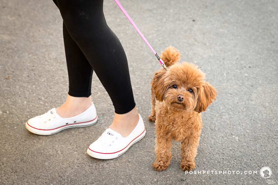 fine art pet photographer in Toronto