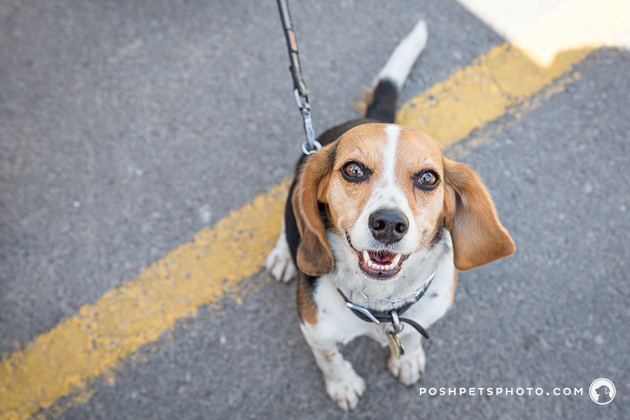 best dog photographer in Toronto