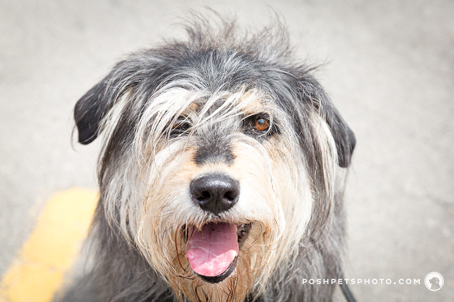 messy hair on a dog photographer
