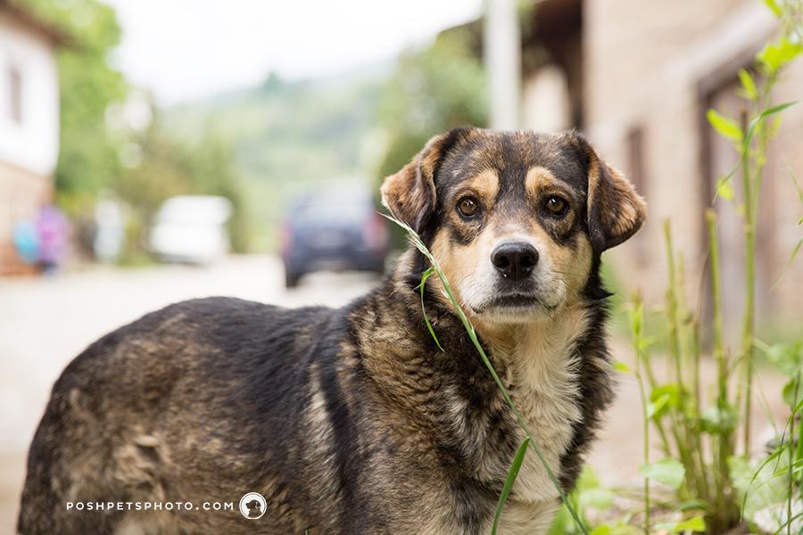 soft gaze of homeless dog