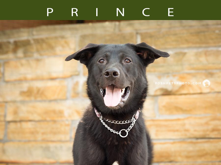 toronto dog portraits posh pets