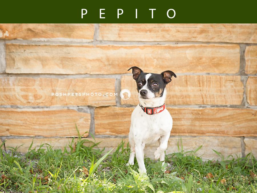 Posh Pets Photography in Toronto