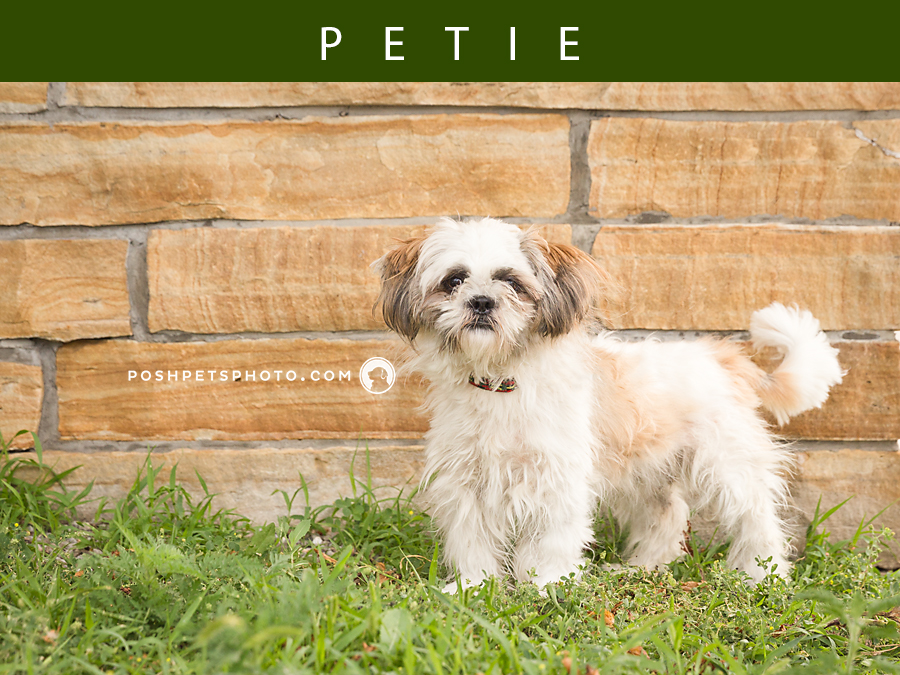 Adoptables – Toronto Animal Services | GTA Dog Photography