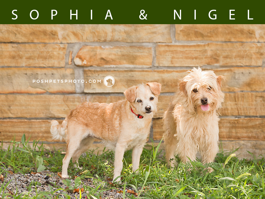 bonded pair of dogs for adoption