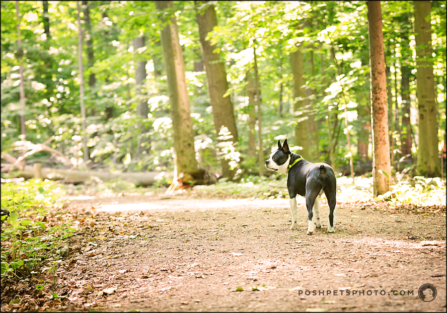 provincial park dog photography