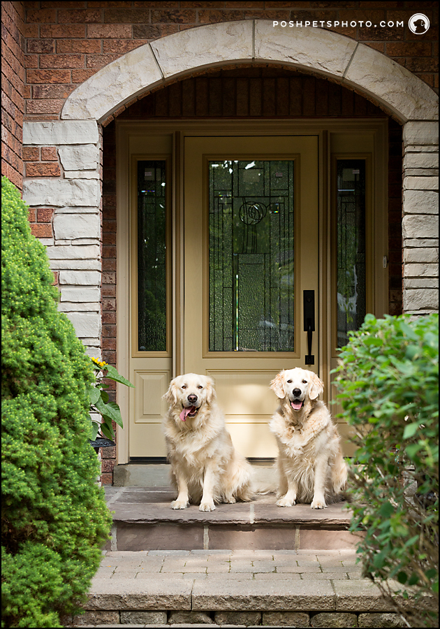 two dogs in front of home