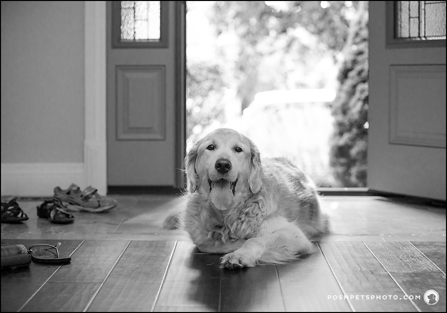 lifestyle dog photography in black and white