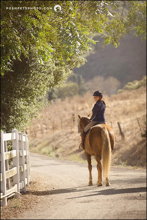 best equine photography