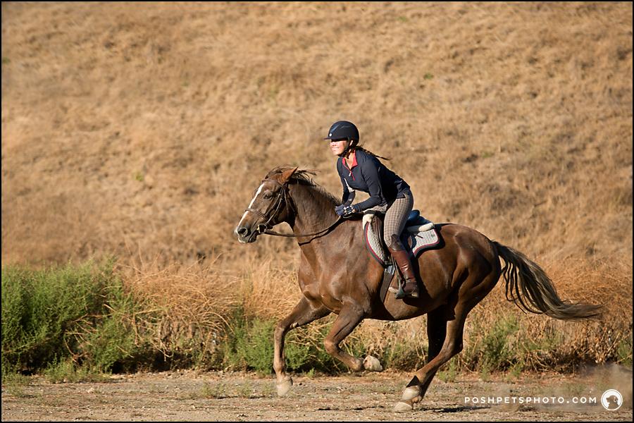 running horse hunter rider