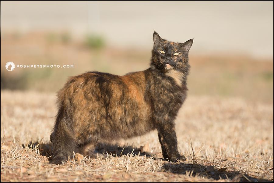 saucy little barn cat
