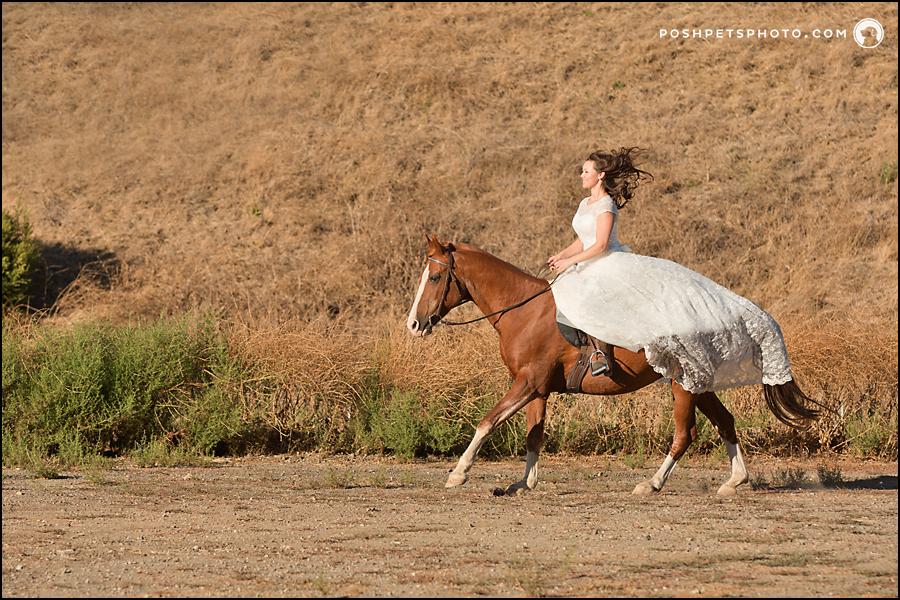 running horse photography