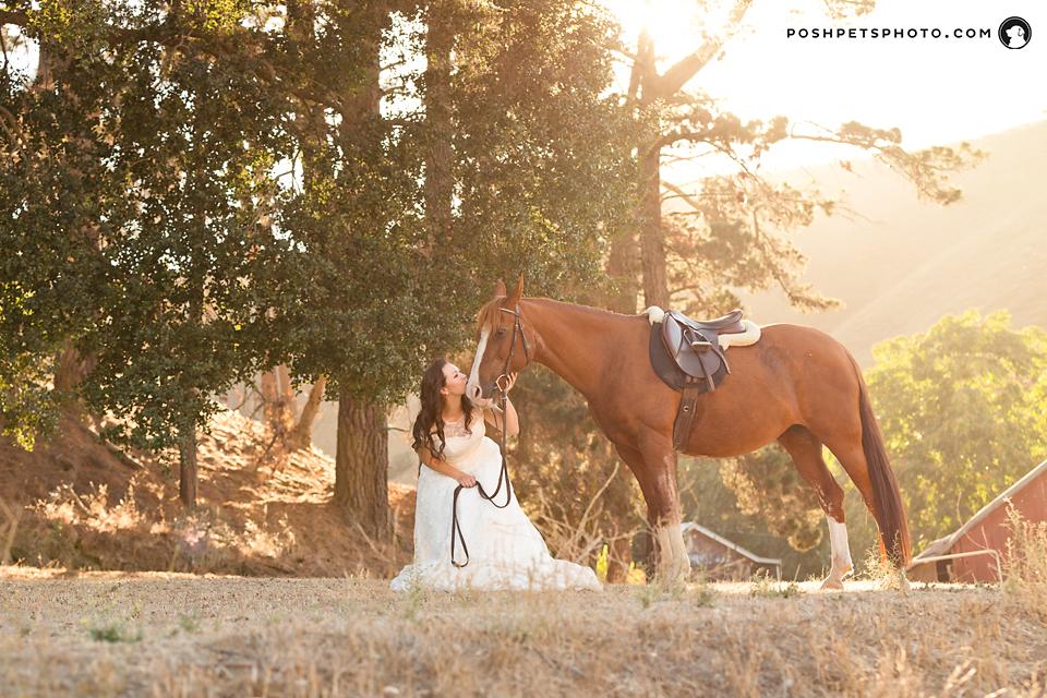 toronto-horse-photographer