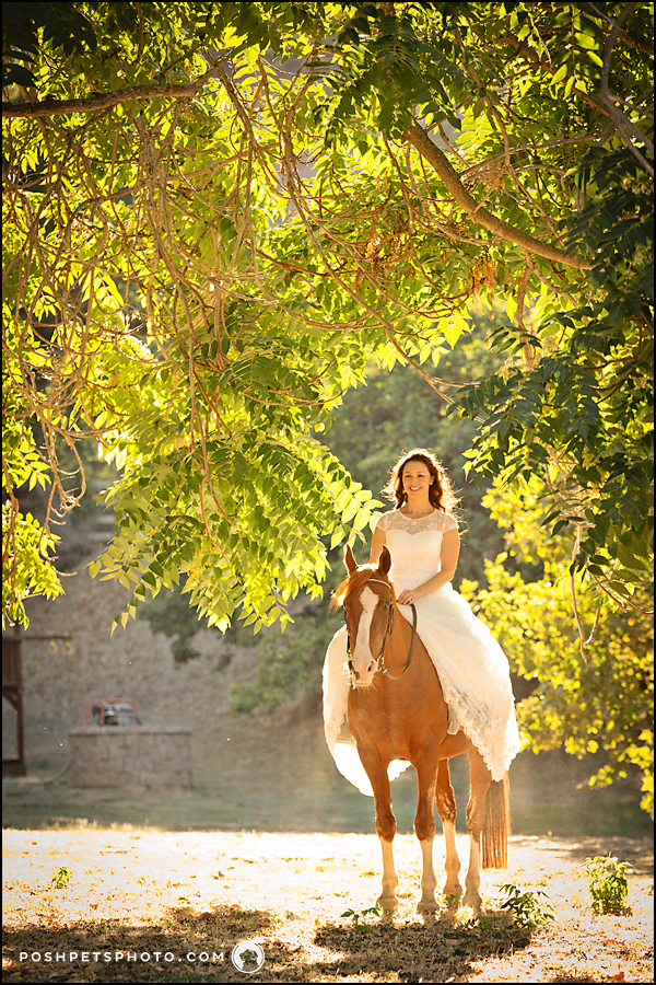 toronto-horse-photography