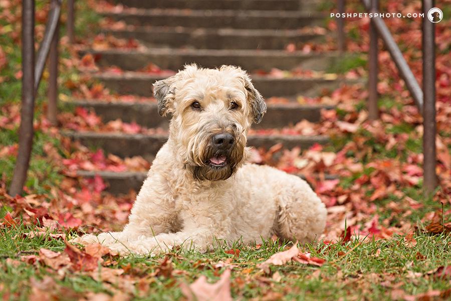 dog portrait in autumn colours