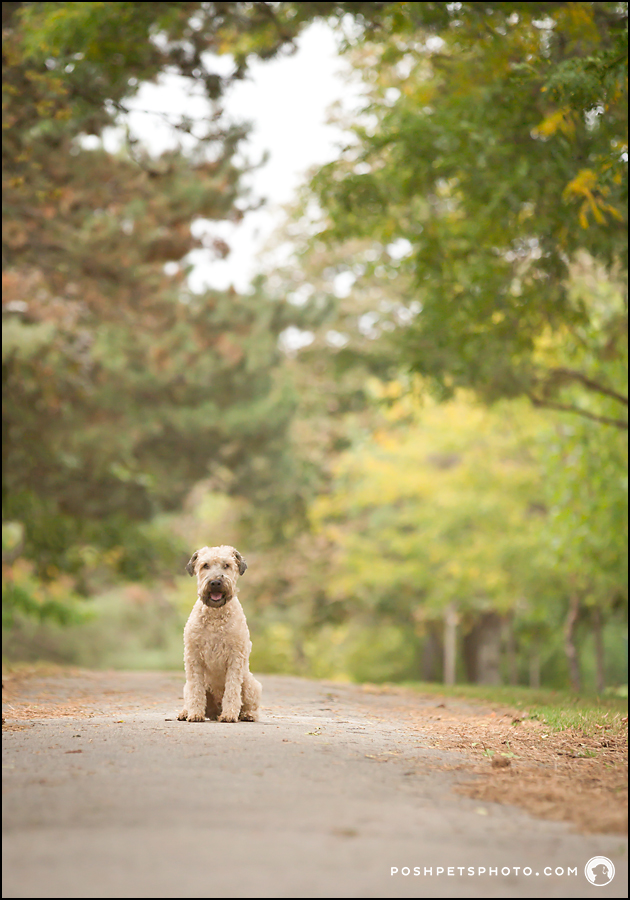 Canadian dog photography