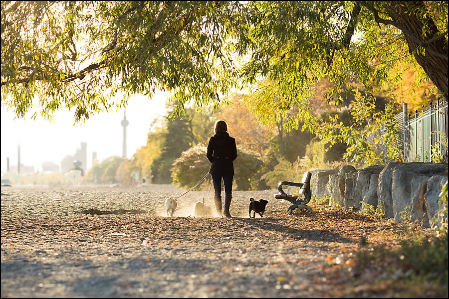 Toronto skyline with 3 dogs