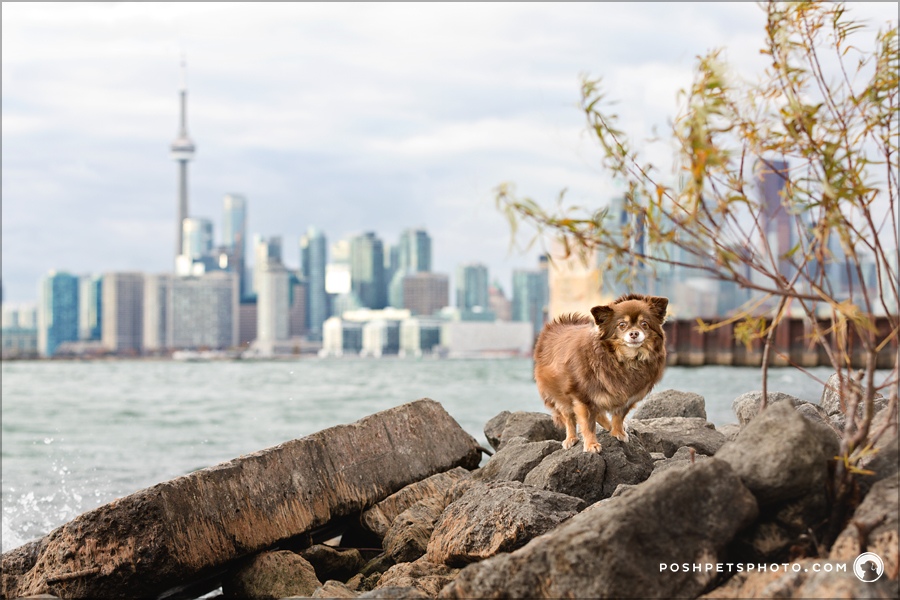 Dog at Cherry Beach in front of CN Tower