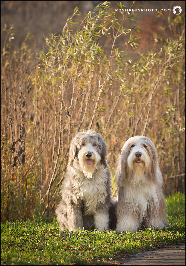 two dogs by rivers edge