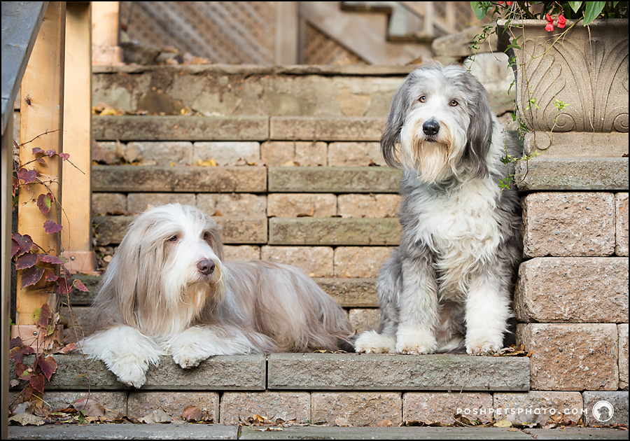 dogs posing on brick steps