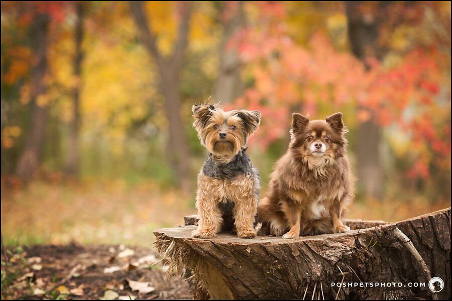 USB digital files from Posh Pets Photography