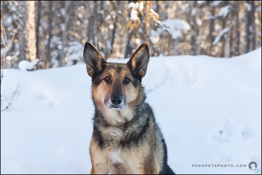 dog portrait in northwest territories