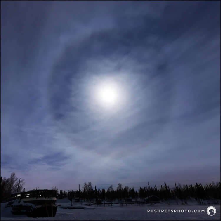 moon dog in the arctic
