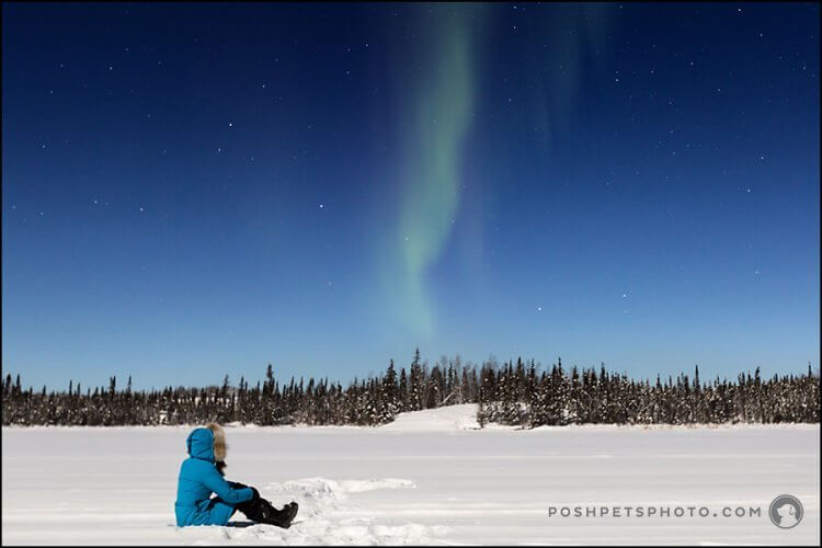 person looking at northern lights