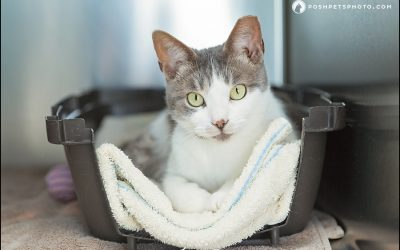 June is Adopt A Shelter Cat Month | Five Reasons to Adopt a Cat
