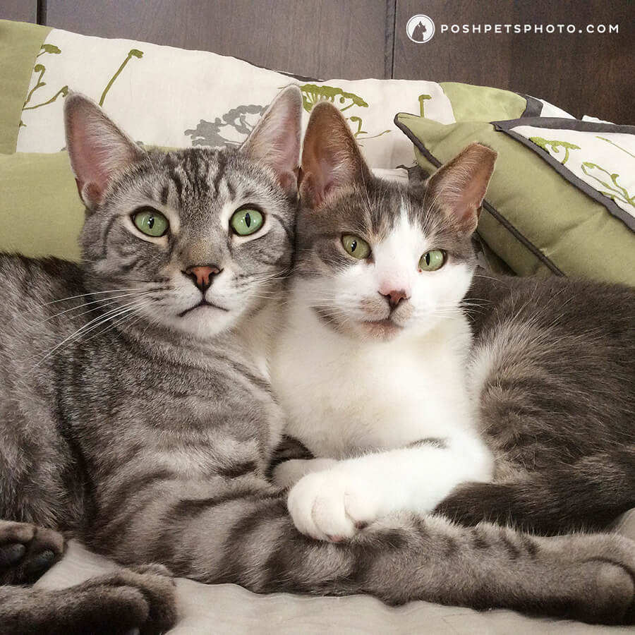 toronto-cat-photographer