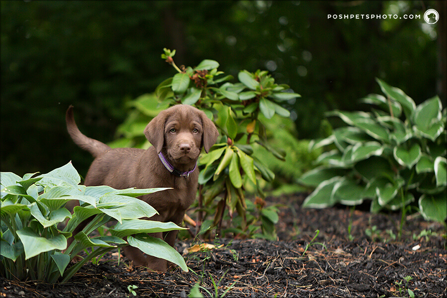 posing puppy in garden bed