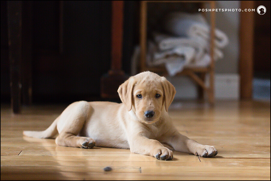 puppy laying on floor at home