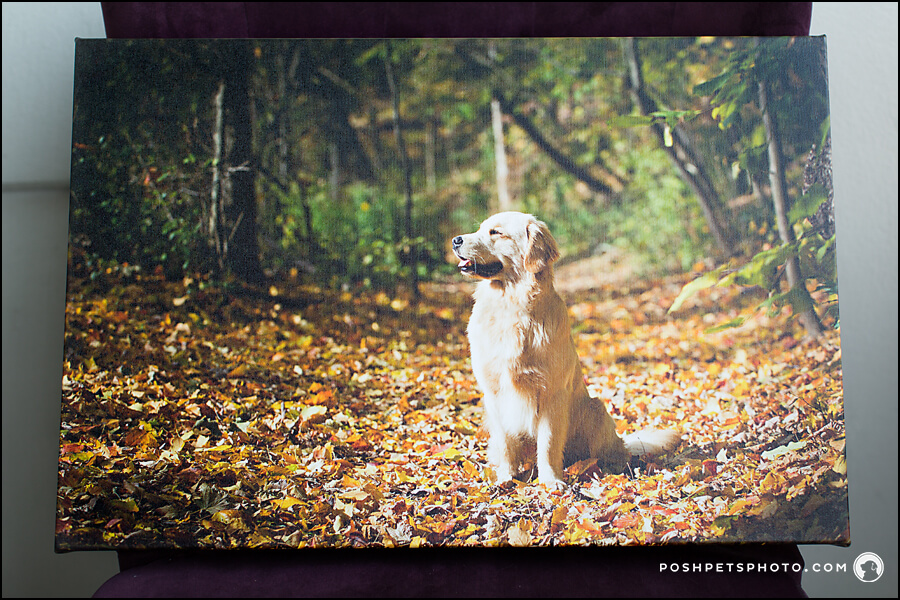 gallery wrapped canvas with Posh Pets Photography in Toronto