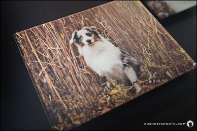 Acrylic Art Piece Posh Pets Photography