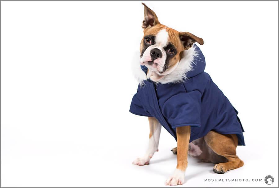 Toronto Pet Model Search