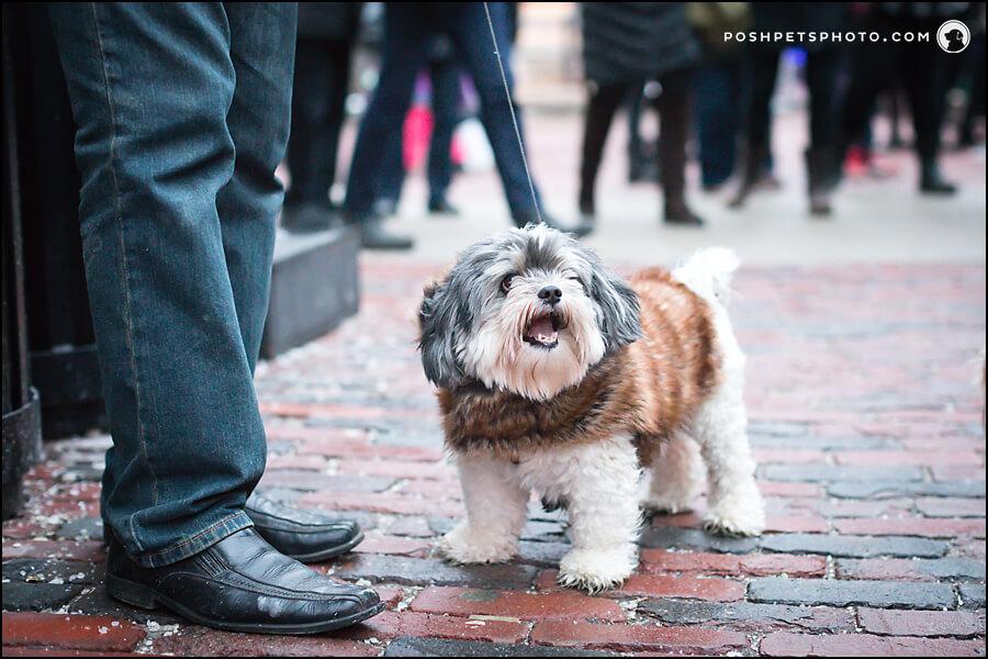 Little dog in Distillery District, Toronto