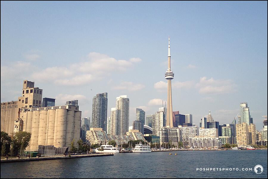 Toronto skyline with CN Tower.