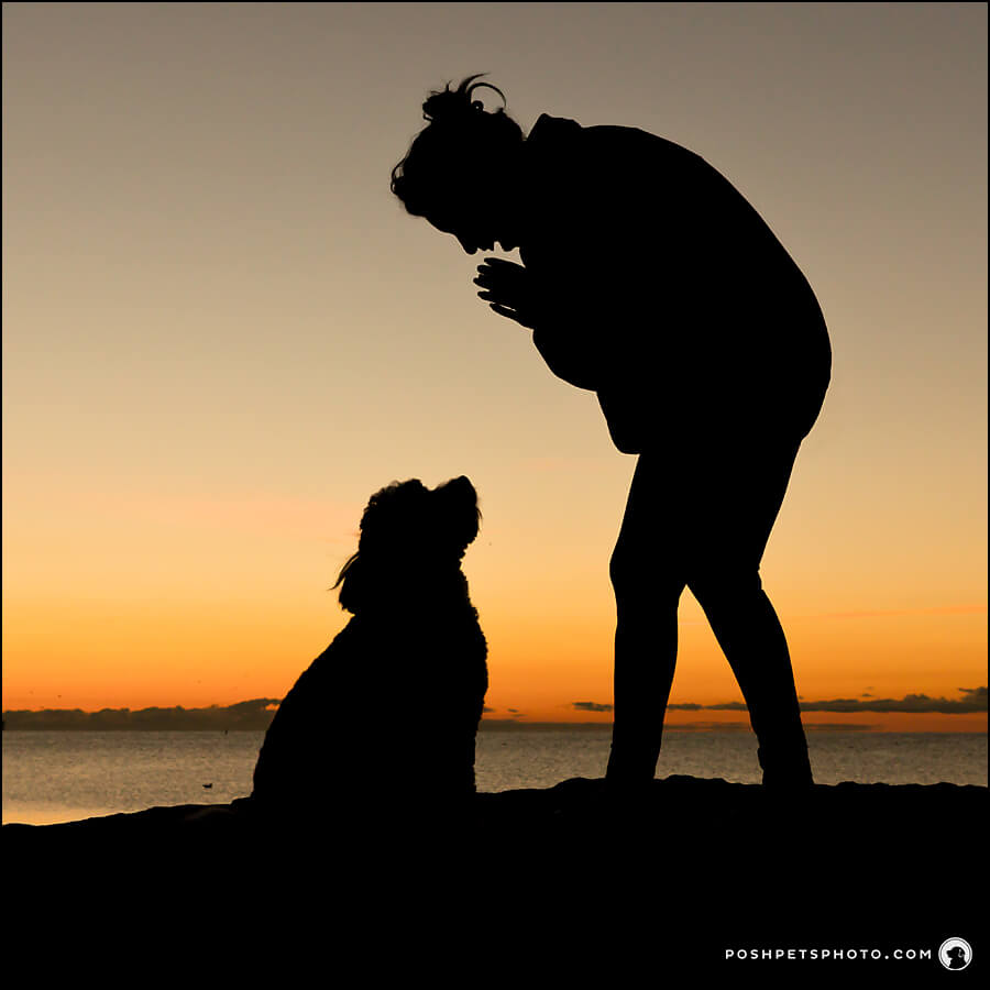 Silhouette of dog at sunrise in Toronto, Canada