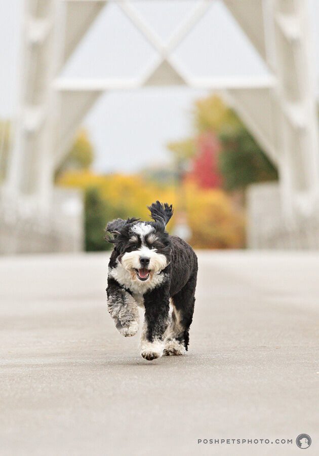 running dog on humber bridge, Toronto series