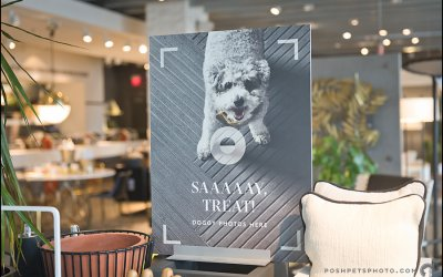 Annual Shelter Support Day @ CB2 | Toronto Dog Event