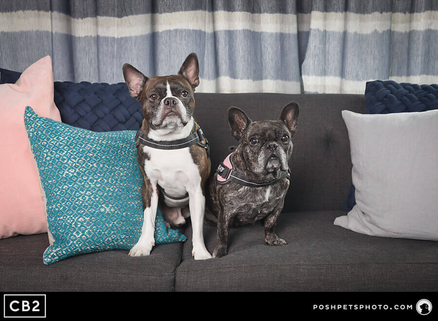 Posh Pets Photography CB2 Toronto