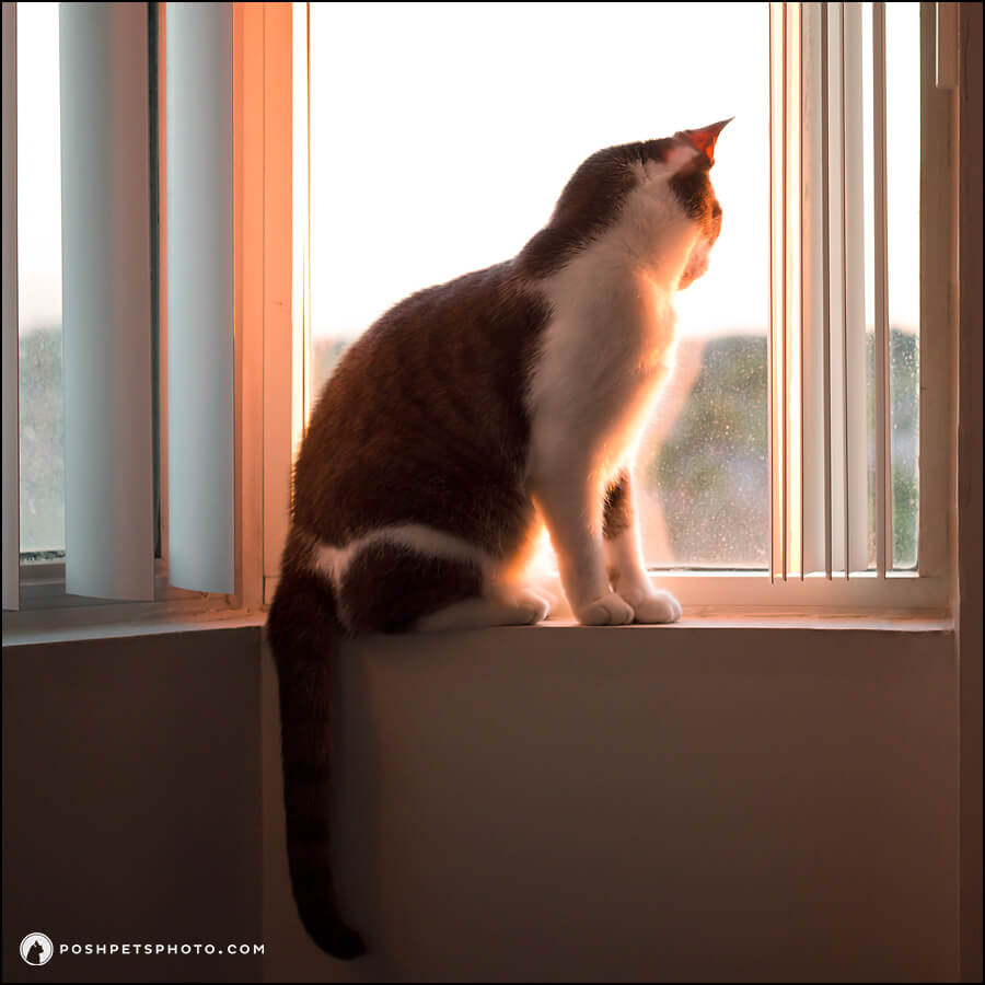 cat looking out window in summer