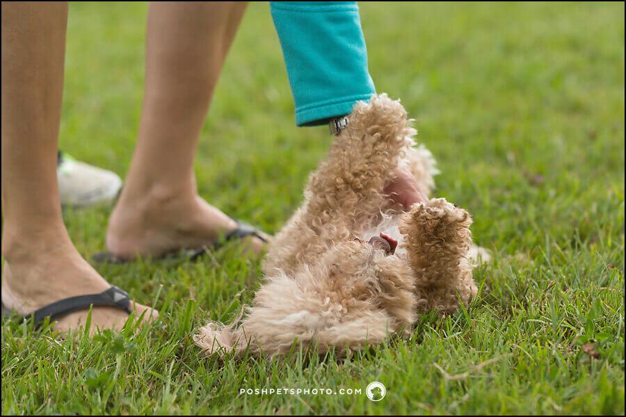 Toronto commercial pet photographer