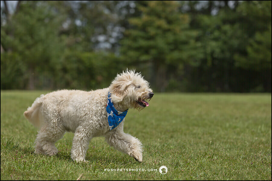 Dog action photography in Toronto, Canada