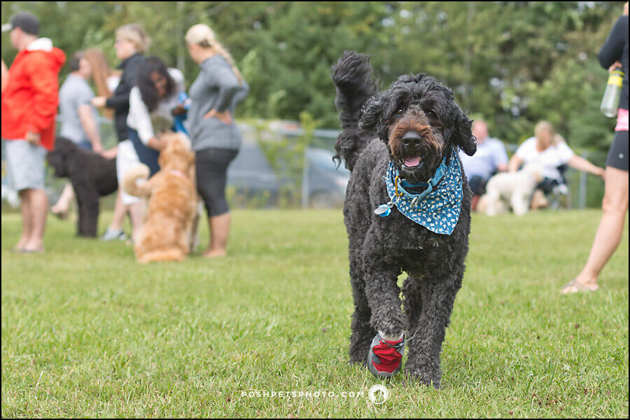 Toronto exclusive dog photographer