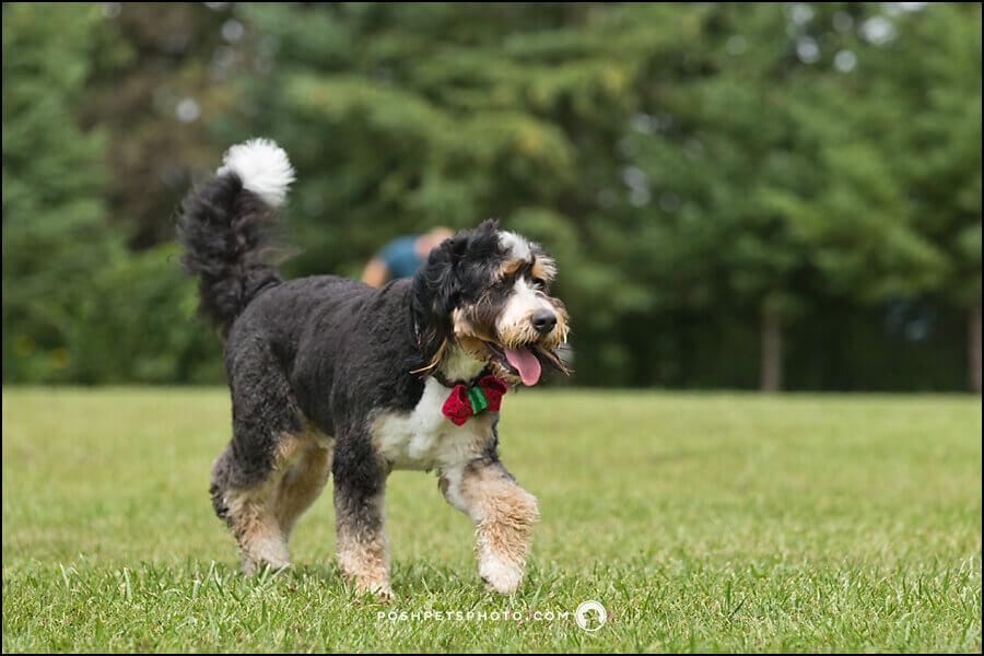 Premier Toronto Dog Photographer
