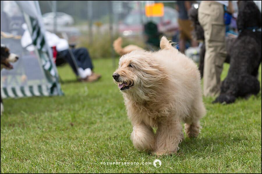 Best Toronto Dog Photographer