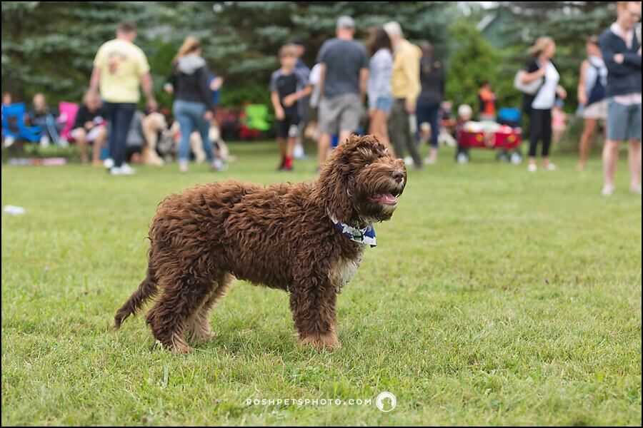 Toronto pet photographer, Posh Pets Photography